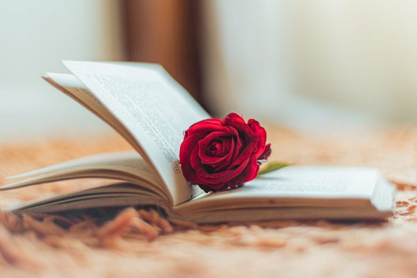 Red rose inside an open book with the flower head outside